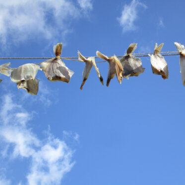 Kliesche Plattfisch auf Wäscheleine