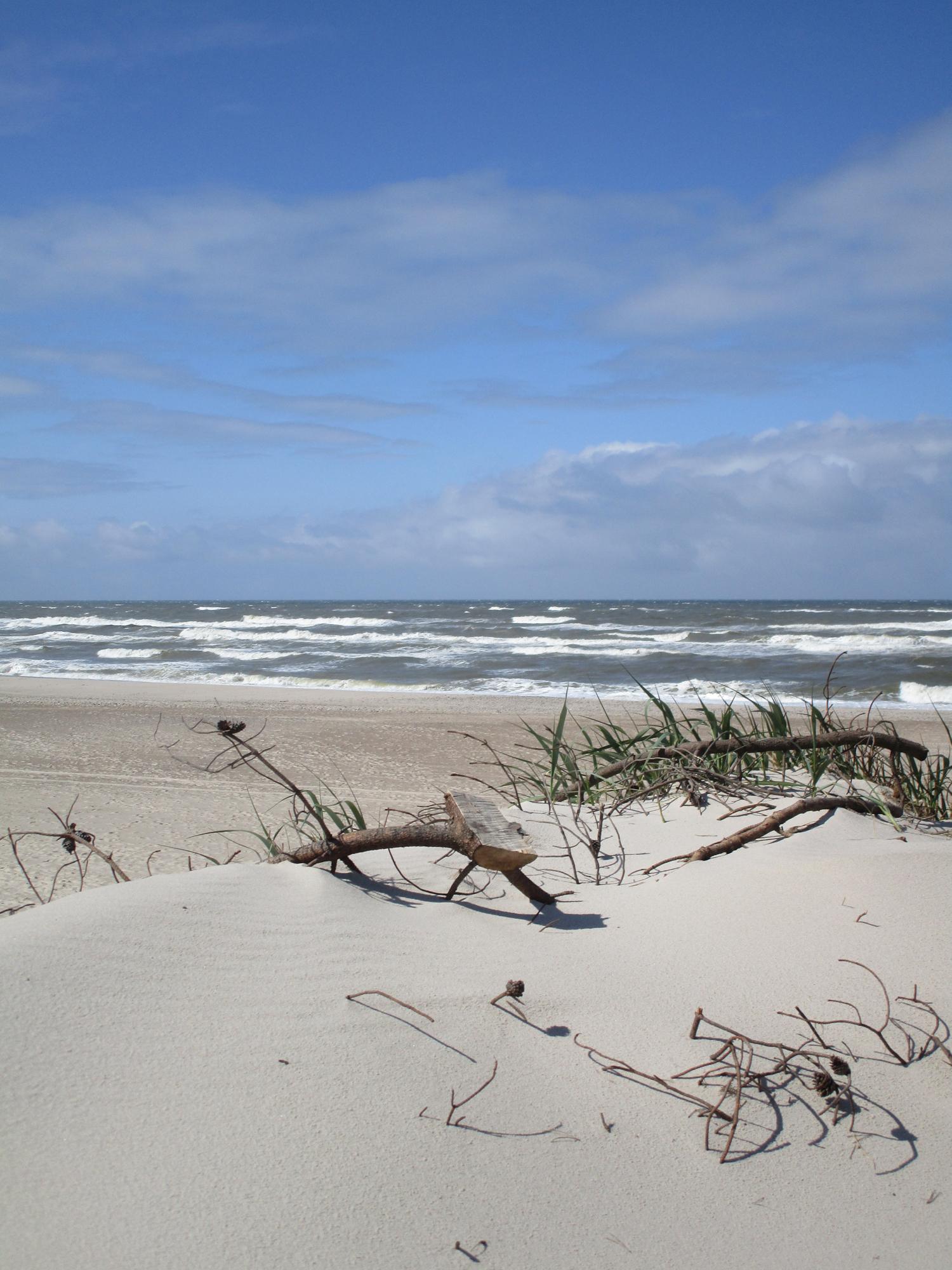 Strand Treibgut